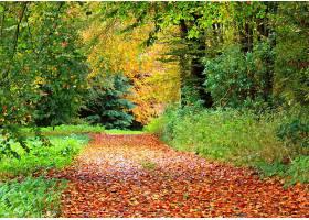 地球,小路,秋天,叶子,森林,树,叶子,壁纸,图片