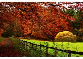 地球,小路,秋天,栅栏,树,叶子,壁纸,图片