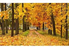 地球,小路,秋天,树,壁纸,图片