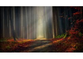 地球,小路,秋天,森林,壁纸,(1)图片