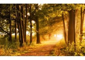 地球,小路,秋天,泥土,路,自然,树,阳光,壁纸,图片