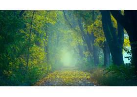 地球,小路,秋天,雾,森林,壁纸,图片