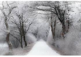 地球,小路,自然,树,冬天的,雪,白色,壁纸,图片