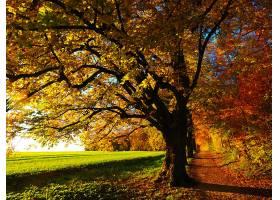 地球,小路,自然,树,秋天,叶子,壁纸,图片