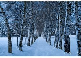 地球,小路,自然,森林,冬天的,树,雪,壁纸,图片