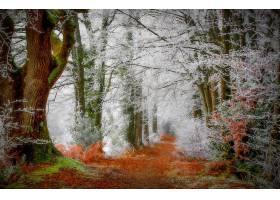 地球,小路,自然,森林,树,冬天的,壁纸,图片