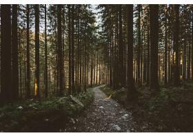 地球,小路,自然,森林,树,壁纸,(12)图片