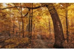 地球,小路,自然,森林,树,秋天,壁纸,图片