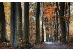 地球,小路,自然,森林,树,秋天,泥土,路,壁纸,(1)图片