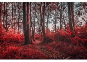 地球,小路,自然,森林,树,红色,壁纸,图片