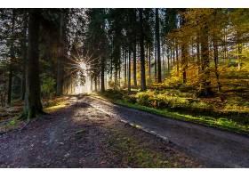 地球,小路,自然,森林,树,阳光,壁纸,(1)图片