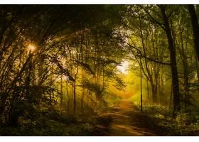 地球,小路,自然,森林,树,阳光,壁纸,图片