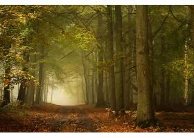 地球,小路,自然,森林,树,雾,泥土,路,壁纸,图片