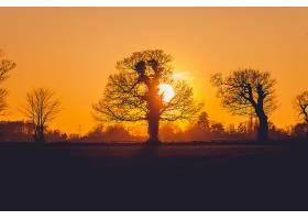 地球,日落,太阳,自然,橙色的,树,轮廓,壁纸,图片