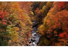 地球,溪流,秋天,叶子,树,自然,壁纸,图片