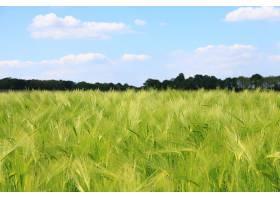地球,小麦,自然,夏天,领域,壁纸,图片