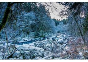 地球,溪流,自然,冬天的,森林,壁纸,图片