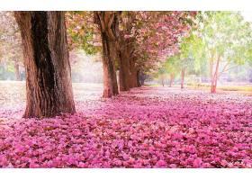地球,树,树,花,花瓣,粉红色,花,公园,绿树成荫,壁纸,图片