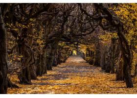 地球,小路,自然,秋天,绿树成荫,壁纸,图片