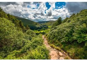 地球,小路,自然,风景,蕨,云,小山,壁纸,图片