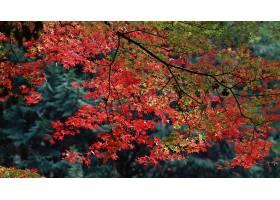 地球,树枝,秋天,叶子,森林,壁纸,图片