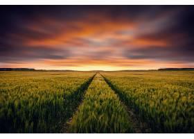 地球,小麦,自然,领域,夏天,云,日落,壁纸,图片