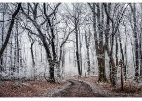 地球,森林,小路,自然,树,冬天的,雾,壁纸,图片