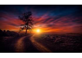 地球,日落,自然,树,泥土,路,天空,壁纸,图片