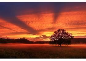 地球,日落,自然,树,阳光,天空,云,壁纸,图片