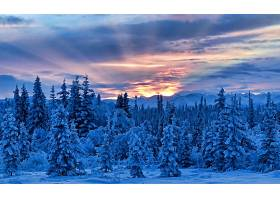 地球,日落,自然,森林,冬天的,雪,山,阳光,云,天空,壁纸,图片