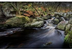 地球,溪流,自然,森林,岩石,壁纸,图片