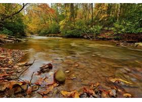 地球,河,水,石头,叶子,森林,绿色的,秋天,壁纸,图片