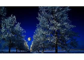 地球,冬天的,树,蓝色,月球,夜晚,绿树成荫,壁纸,图片