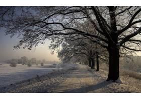 地球,冬天的,自然,雪,树,绿树成荫,泥土,路,壁纸,图片