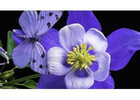 地球,花,花,蝴蝶,紫色,花,壁纸,图片