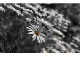 地球,雏菊,花,自然,巨,花,领域,壁纸,图片