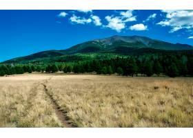 山,山脉,森林,草,领域,小路,自然,树,壁纸,图片