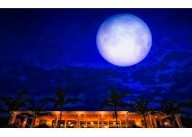 月球,天空,蓝色,手掌,树,建筑物,夜晚,壁纸,图片