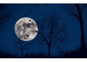 月球,天空,蓝色,树,轮廓,自然,壁纸,图片