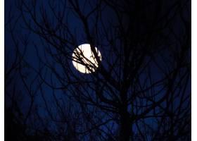 月球,树,轮廓,夜晚,蓝色,壁纸,图片