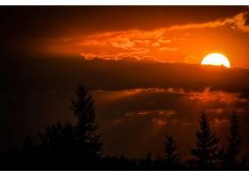 日落,天空,太阳,橙色的,树,轮廓,壁纸,图片