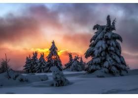 日落,自然,冬天的,树,雪,云,壁纸,图片