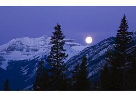 月球,天空,夜晚,山,冬天的,树,蓝色,自然,壁纸,图片