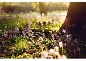 地球,花,花,自然,弹簧,壁纸,(1)图片