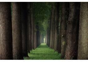 小路,树,草,绿树成荫,壁纸,图片