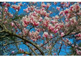 地球,花,花,自然,树枝,花,弹簧,粉红色,花,壁纸,图片