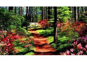 森林,自然,花,小路,植物,壁纸,图片