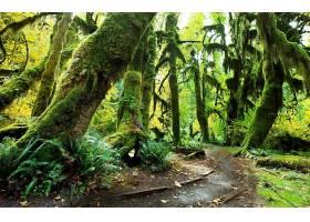 森林,自然,苔藓,绿色的,树,植物,壁纸,图片