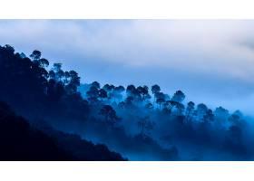 森林,自然,蓝色,雾,风景,壁纸,图片