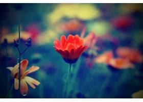 地球,花,花,自然,污迹,橙色的,花,壁纸,图片